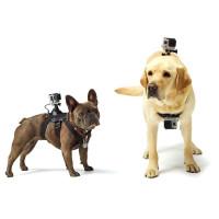 Montering Til Hunde